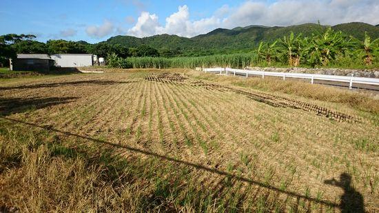 稲刈りの終了です