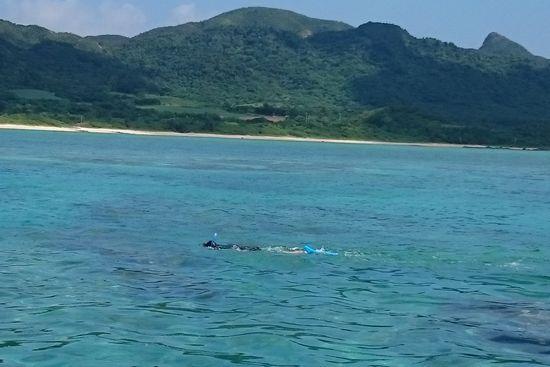 港に向かって泳いでいます