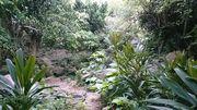 ジャングルですね。。。