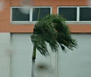 メイクマンのヤシの木
