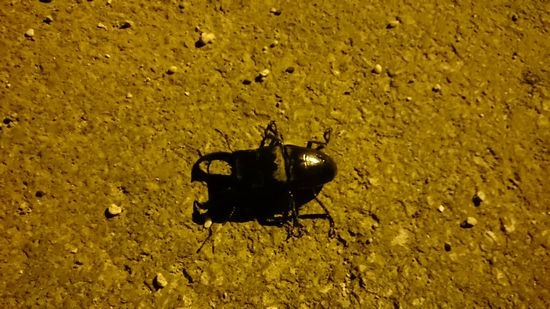 道路に黒い物体です。