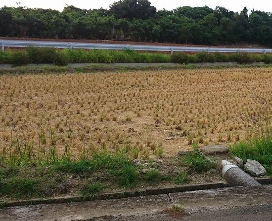 稲刈り完了といったところです。