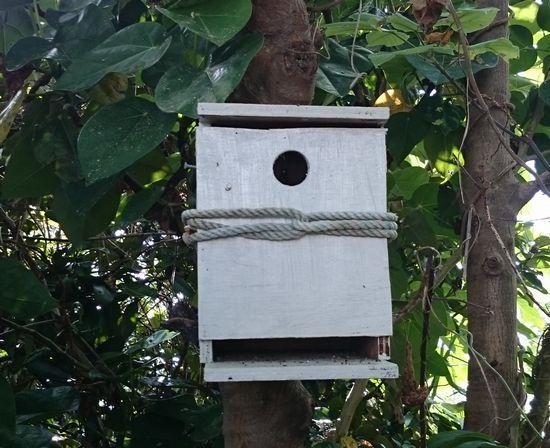 鳥の巣箱もしっかり対策です。