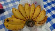 おいしい島バナナ頂きました
