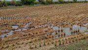 近所の田んぼ。収穫完了です。