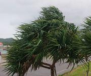 風が強いです。