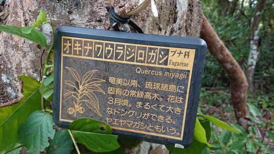 石垣島で秋探し