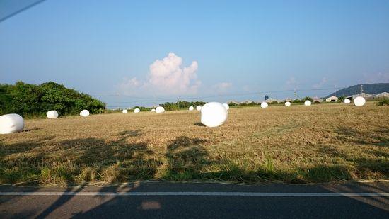 牧草ロールいっぱいです。