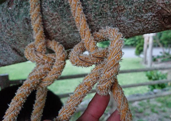 木に巻き結び