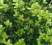 新緑の季節、4月5月ですね!