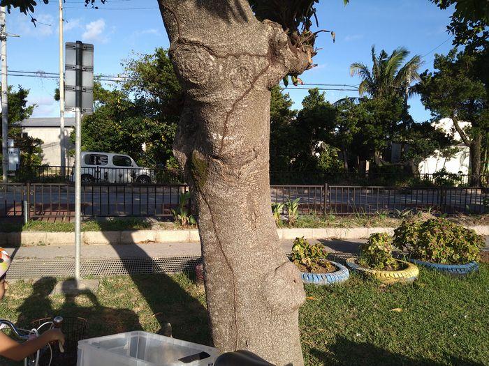 集落のとある木