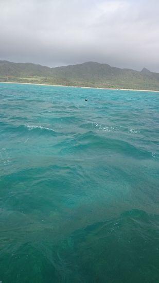 水中はどんよりしています・・・。
