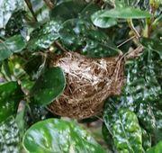 庭の木に鳥の巣