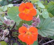ポツンとオレンジ色の花
