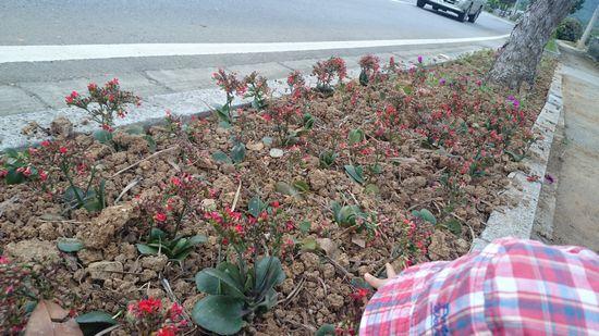 街路樹にお花を植えていて。。。