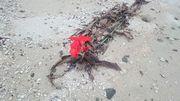 ビーチに鮮やか過ぎる花