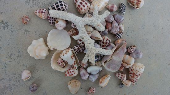 ビーチで貝殻ひろい♪