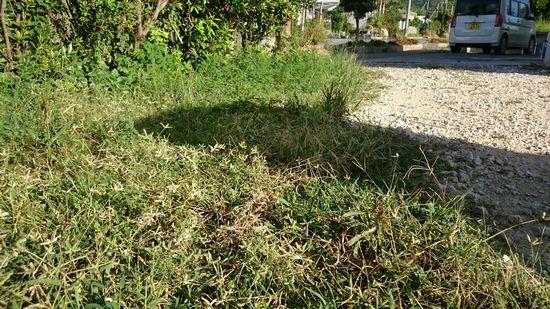 庭の草が、ぼーぼーに。。。