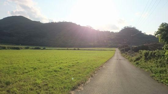牧草地が広がっています。