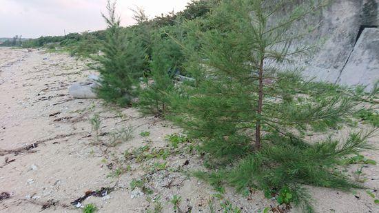 ビーチに木。そういえば