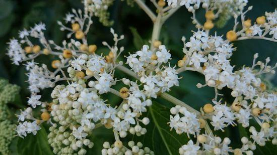 白い花だけど。