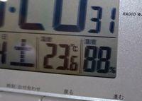 今日も湿度が高い石垣島です。