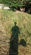 草ぼうぼうです。