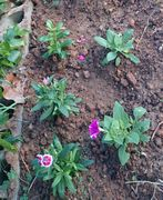 花壇、植えかえました