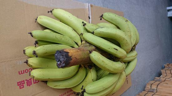 またまたバナナ、頂きましたっ