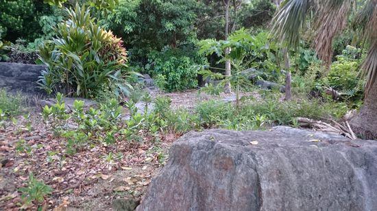公民館隣の岩石公園