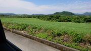 まだまだ緑がいっぱい!冬準備はまだ早い石垣島です