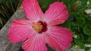 2月の石垣島は元気な植物がいっぱいです