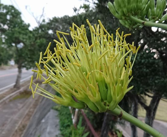 地味な花です