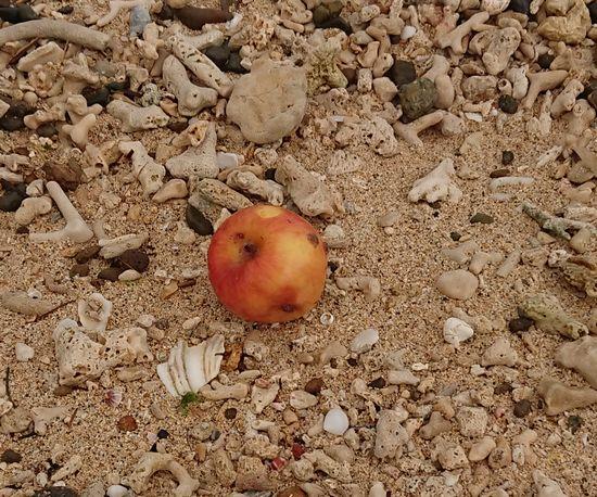 ん!リンゴが落ちている