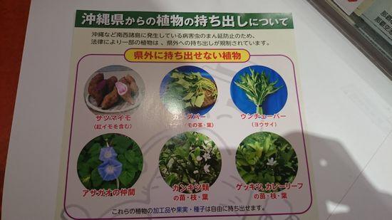 沖縄からお土産にしちゃだめな植物