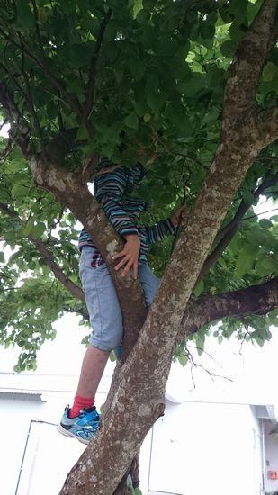 木のぼりしているチビすけ