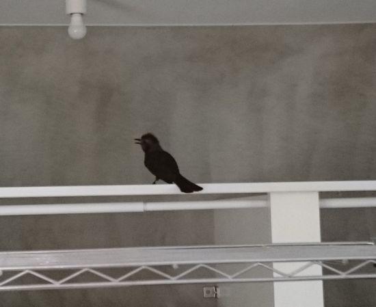 鳥さんこんにちは!