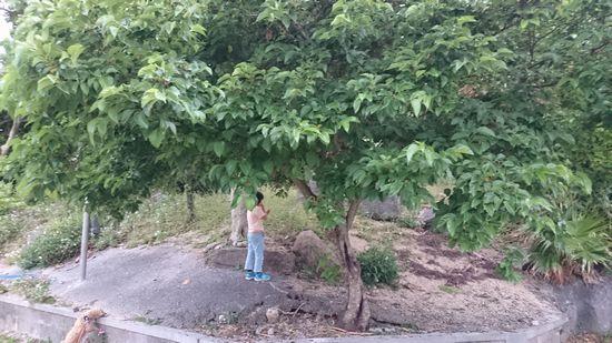 公民館のとある木