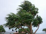 まだ風が強いです