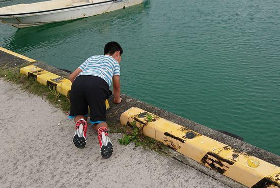港で覗き込んでいます。