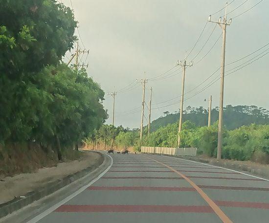 石垣島の日本最南端の国道