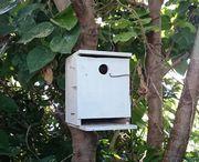 やっぱりヤモリの巣箱です。
