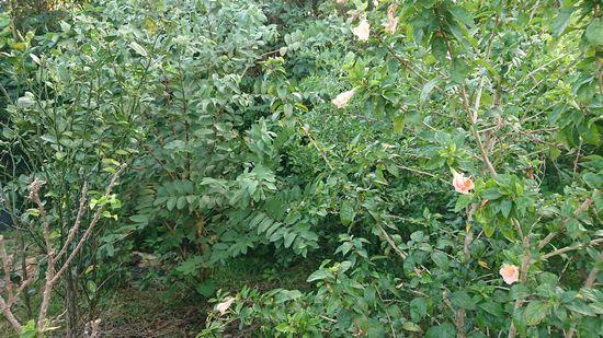 庭がもうジャングル状態です。