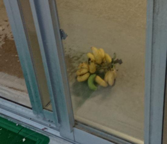 バナナ。頂きました