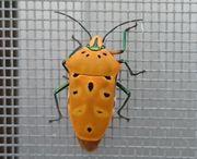 初めてみると虫さんです。