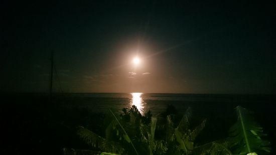 キレイなお月さんです。