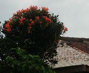 民家の花が鮮やかです