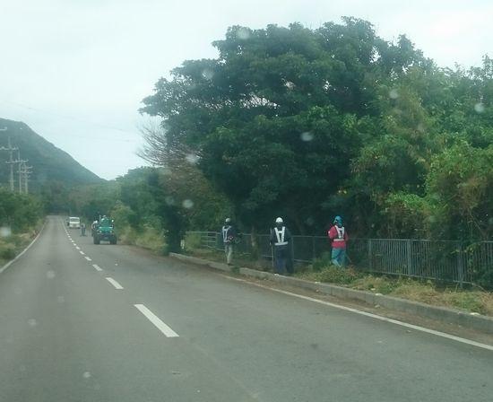 石垣島のヒーロー、草刈り部隊です。