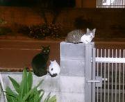 夜。くつろいでいる猫たち