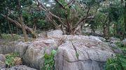 公民館裏の岩石公園